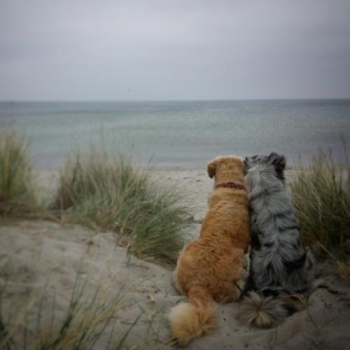 Ostsee-romantik