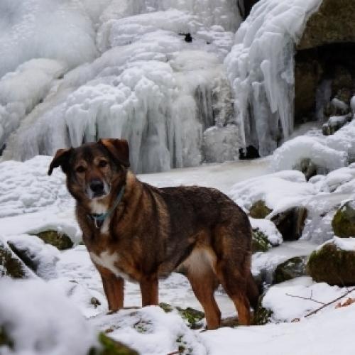 Hexe in der winterlichen Eislandschaft