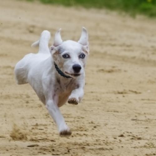 Run Buddy Run!!