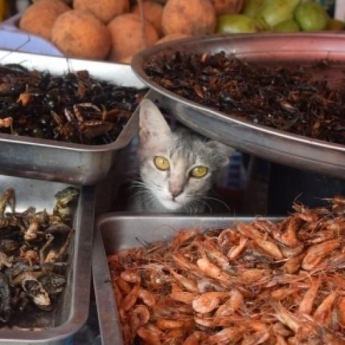 Markt in Battambang/Kambodscha